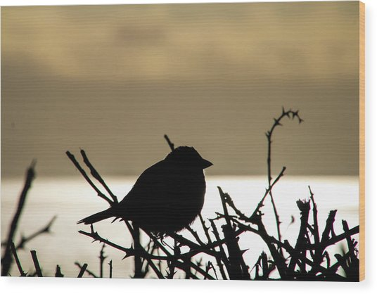 Sunset Bird Silhouette Wood Print