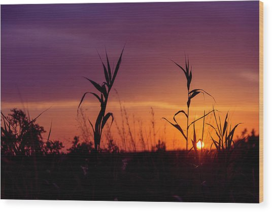 Sunset Colours Wood Print by Nikos Stavrakas