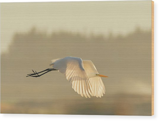 Sunset Egret Wood Print
