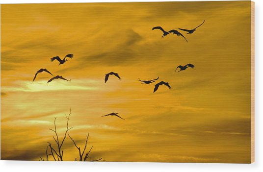 Sunset Fliers Wood Print