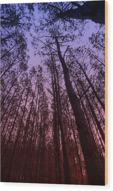 Sunset Forest Wood Print