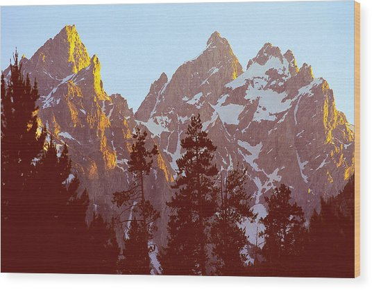 Sunset Gold Tetons Nat Wood Print by Alan Lenk