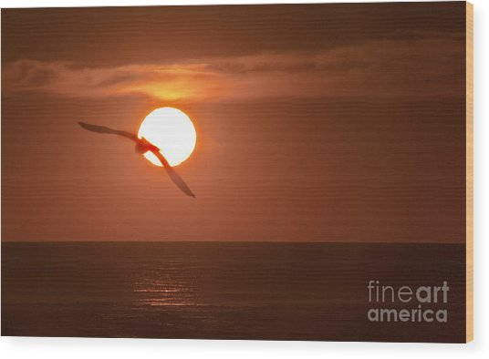 Sunset Gull No.1 Wood Print by Scott Evers