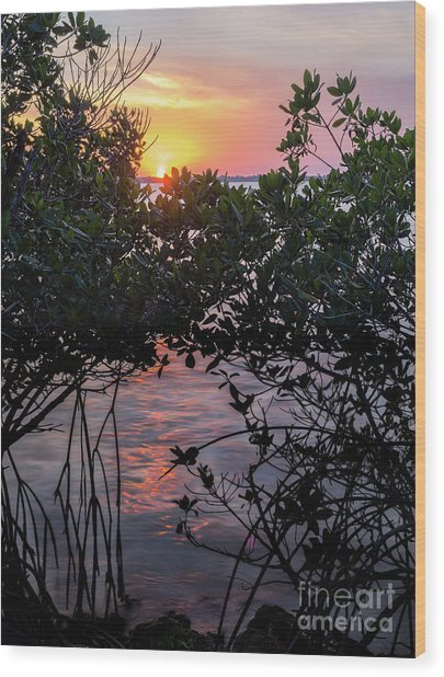 Sunset, Hutchinson Island, Florida  -29188-29191 Wood Print