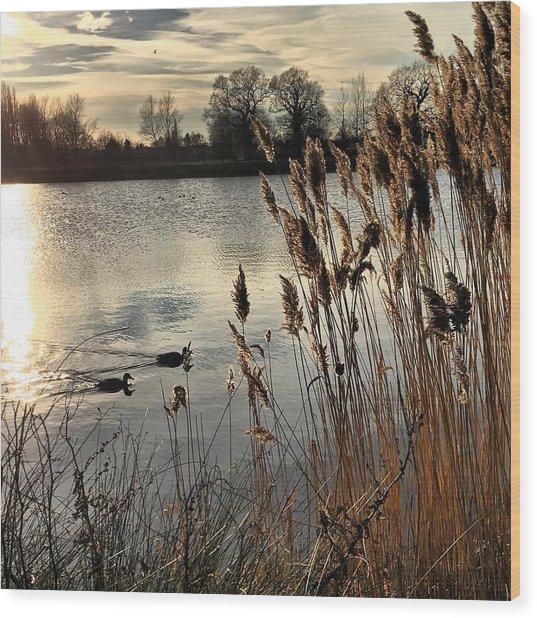 Sunset Lake  Wood Print
