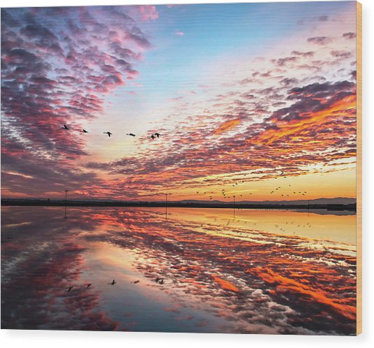 Sunset On The Pacific Flyway Wood Print
