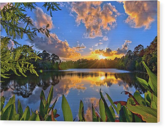Sunset Over Hidden Lake In Jupiter Florida Wood Print