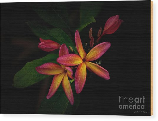 Sunset Plumerias In Bloom #2 Wood Print