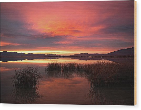 Wood Print featuring the photograph Sunset Reeds On Utah Lake by Wesley Aston