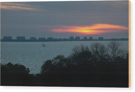 Sunset Sail On Sarasota Bay Wood Print