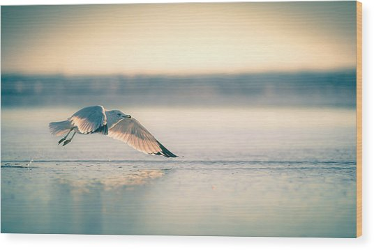 Sunset Seagull Takeoffs Wood Print