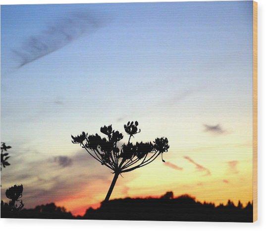 Sunset Seedhead Silhouette  Wood Print
