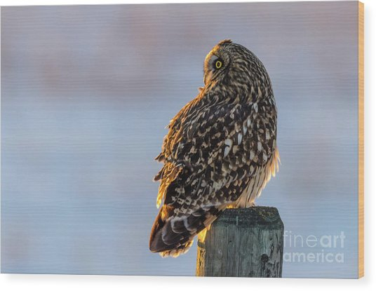 Sunset Short-eared Owl Wood Print
