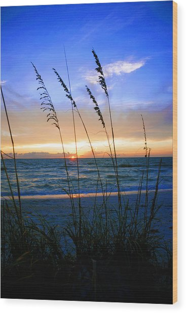 Sunset Thru The Sea Oats At Delnor Wiggins Wood Print