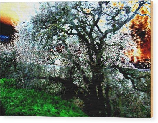 Sunset Wood Print by Tim Tanis