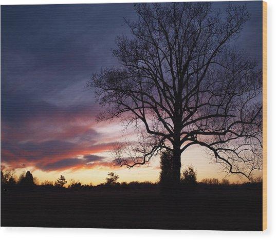 Sunset Tree Wood Print by Michael Edwards