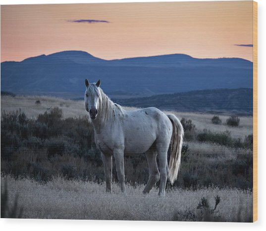 Sunset With Wild Stallion Tripod In Sand Wash Basin Wood Print