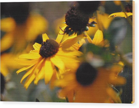 Sunshine And Daisies Wood Print by Trudi Southerland