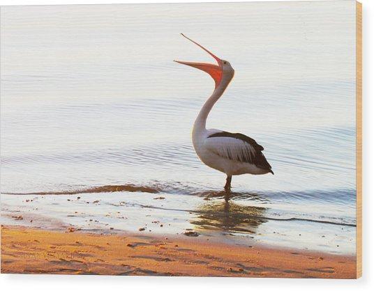 Sunshine Coast Pelican Wood Print