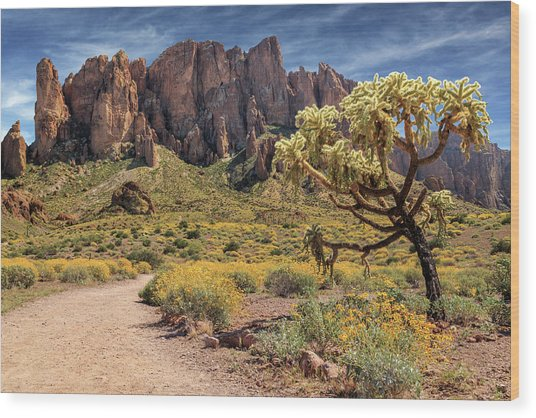 Superstition Mountain Cholla Wood Print