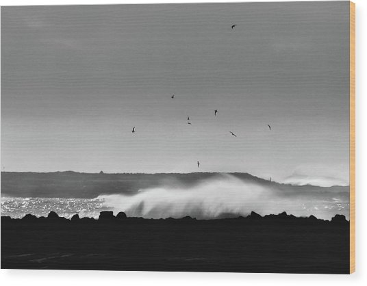 Surf Birds Wood Print