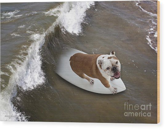 Surfer Dog Wood Print