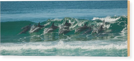Surfing Dolphins 4 Wood Print