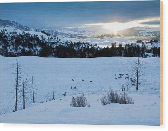 Surise Elk Herd Wood Print