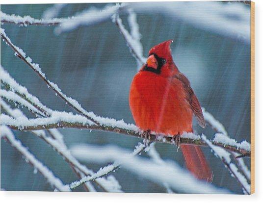 Surprise Snow Wood Print