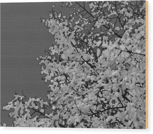 Surreal Deconstruction Of Fall Foliage In Noir Wood Print