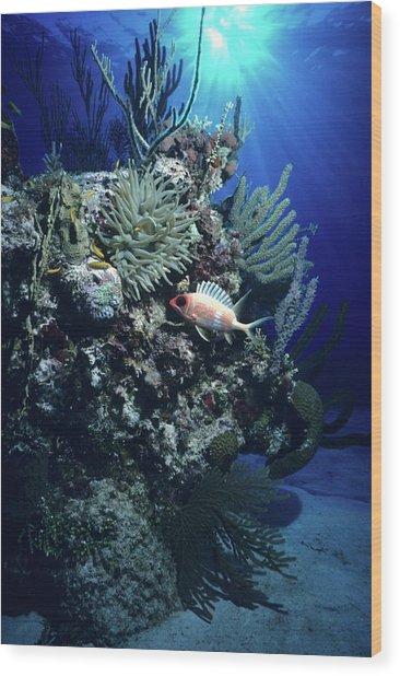 Surreal Reef Collage Wood Print