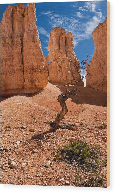 Surrounded By Hoodoos Wood Print by James Marvin Phelps