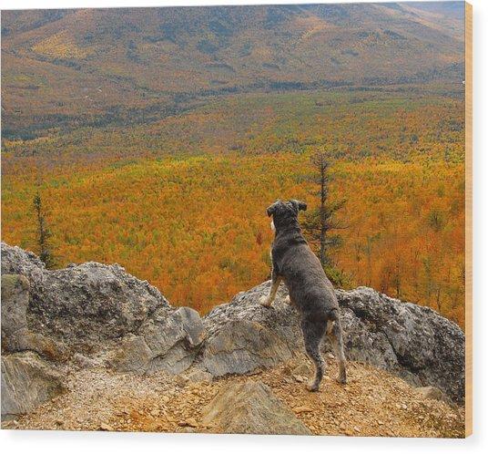 Surveying Autumn Wood Print