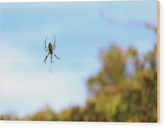 Suspended Spider Wood Print