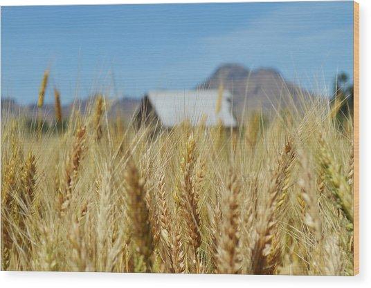 Sutter Buttes Wheat  Wood Print