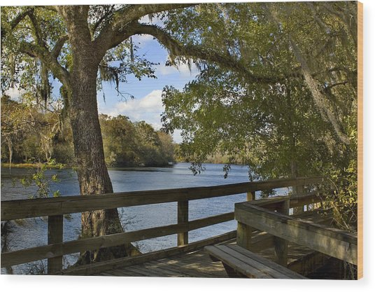Suwannee River Boardwalk Photograph By Stacey Lynn Payne