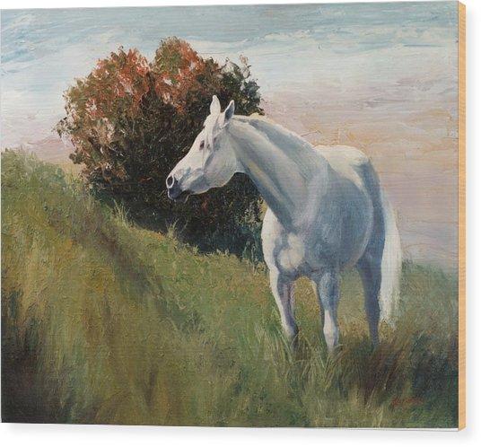 Suzie  Arabian Horse Portrait Painting Wood Print by Kim Corpany