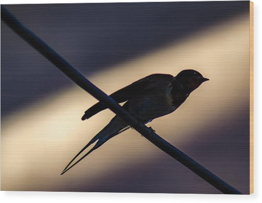 Swallow Speed Wood Print