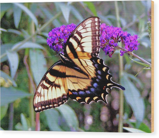 Swallow Tail Butterfly Wood Print