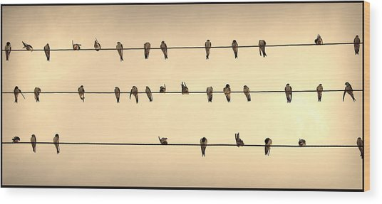 Swallows On Wires Wood Print