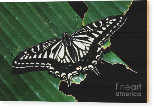 Swallowtail Butterfly- Close Wood Print