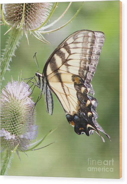 Swallowtail Delight Wood Print
