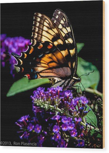 Swallowtail Feasting Wood Print by Ron Plasencia