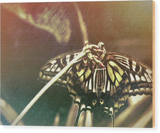 Swallowtail Wood Print by JAMART Photography
