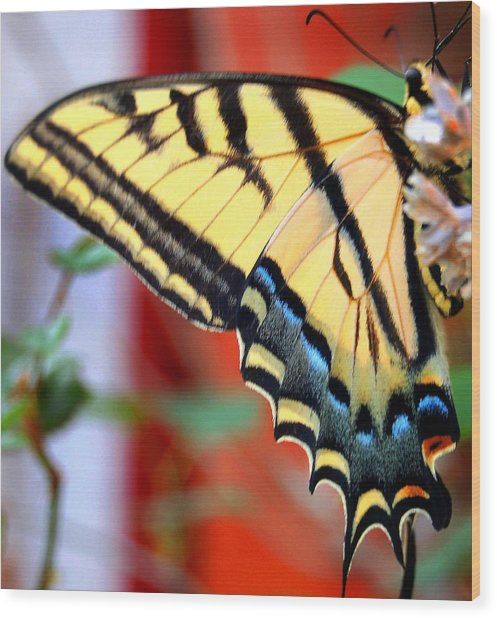 Swallowtail Wing Wood Print by Heather S Huston