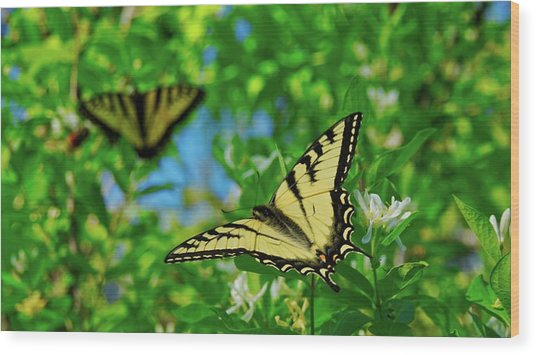 Swallowtails Wood Print