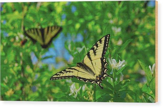 Swallowtails Wood Print