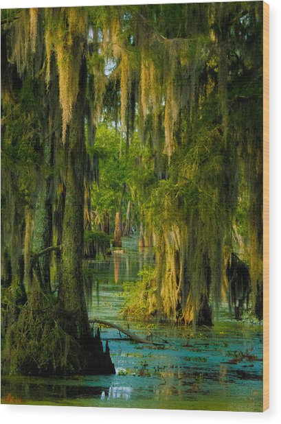 Swamp Curtains In May Wood Print