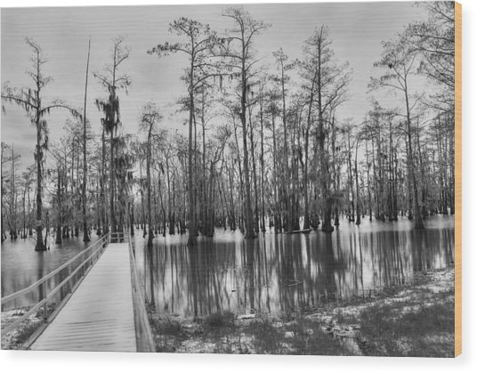 Swamp Dock Black And White Wood Print