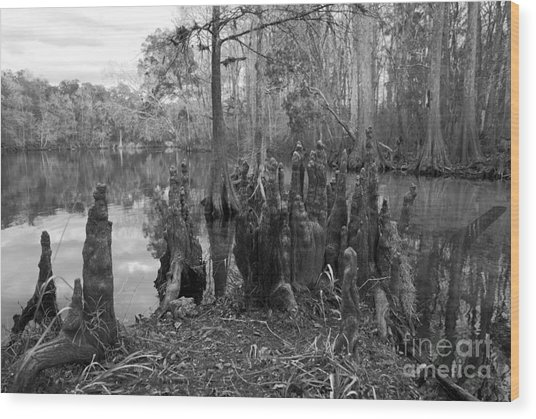 Swamp Stump Wood Print
